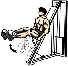 friday-gym-workout-schedule-leg-extension