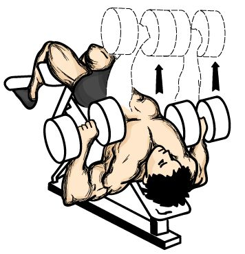 monday-gym-schedule-for-chest-decline-dumbbell-flyes