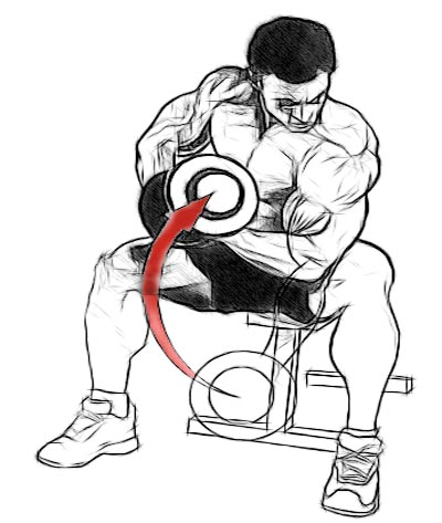 tuesday-gym-workout-schedule-bicep-concentration-curls