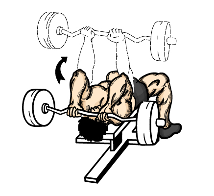 wednesday-gym-workout-schedule-barbell-skull-crushers