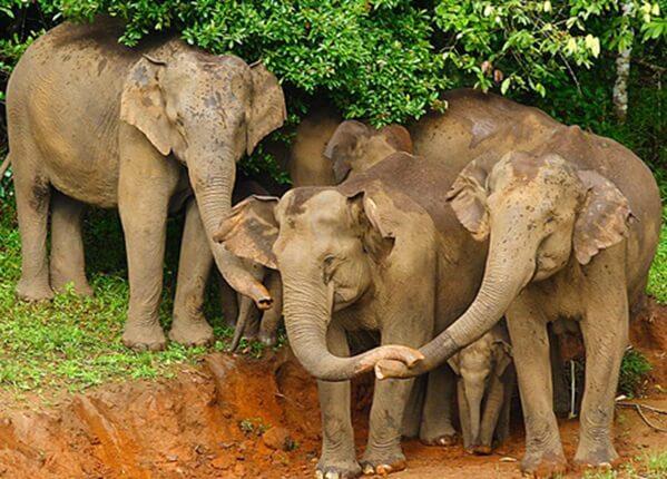 periyar wildlife sanctuary in kerala