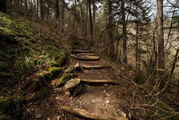 Image shows Steps on the Appalachian Trail leading to Clingman's Dome in the Great Smoky Mountains National Park, Tennessee.