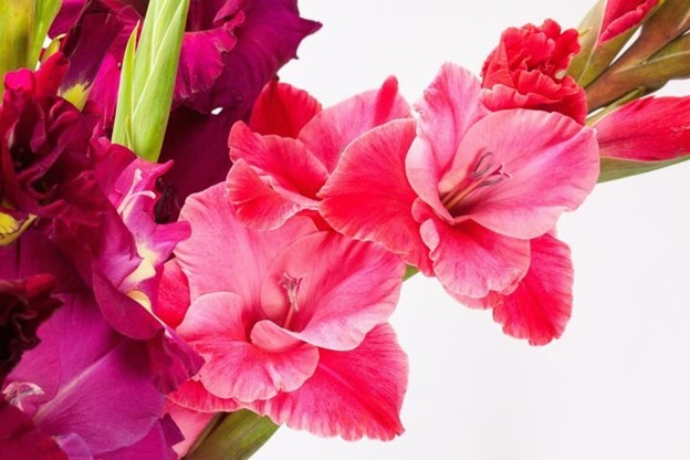gladiolus and poppy flowers gift
