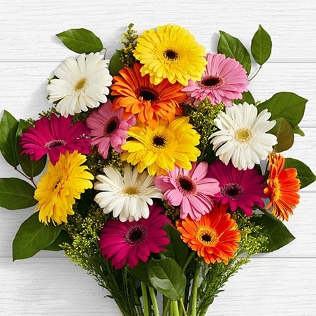 happy birthday daisy flowers