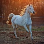 Getting Horses? 4 Things You Need to Do to Prepare Your Land