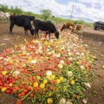Food Waste Recycling through Animal Food