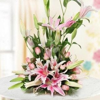 peruvian lily flowers