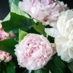 Best Floral Gifts To Show How You Care For Someone