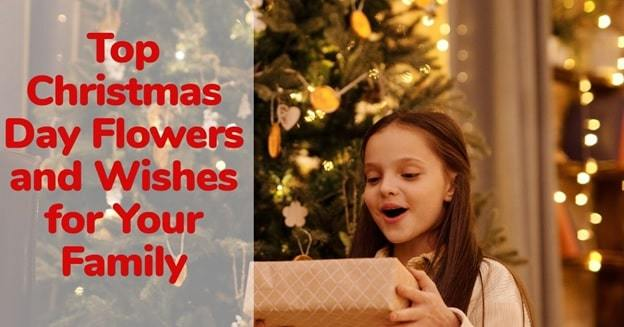 christmas flowers and wishes
