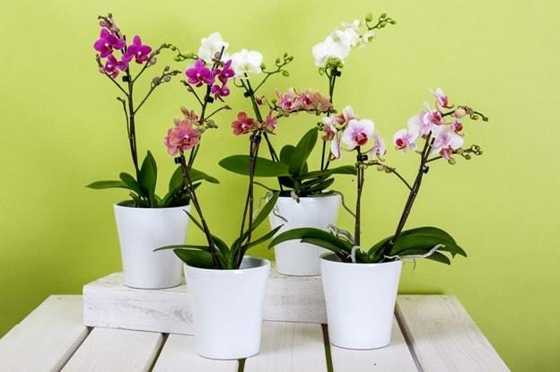 orchids and mistletoes collection