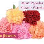 Most Popular Carnation Flower Varieties by Color