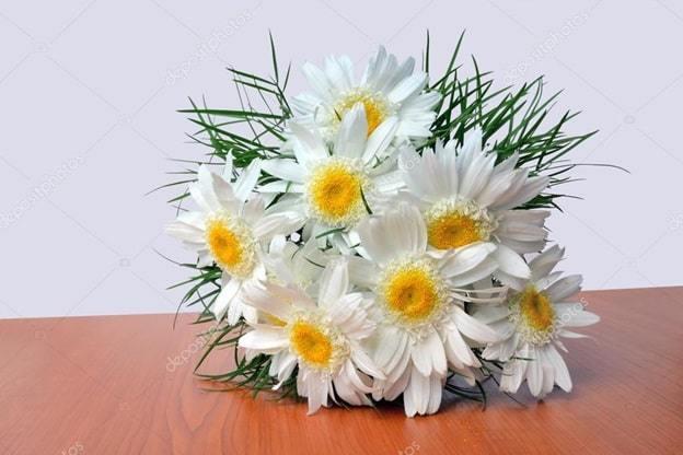 white and yellow daisies