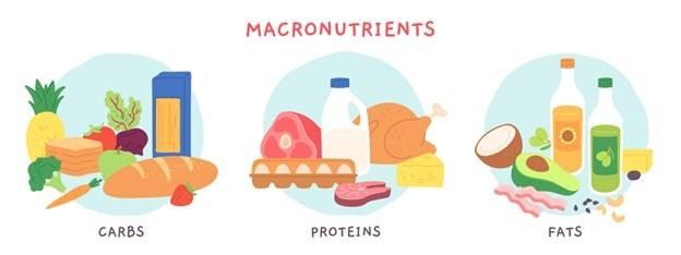 macronutrients