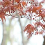 6 Common Trees That Need Regular Pruning