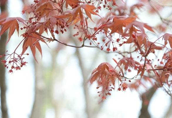 common trees for pruning