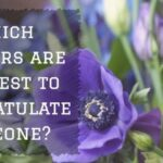Which Flowers are the Best to Congratulate Someone?