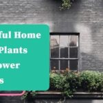 Beautiful Home Decor Plants and Flower Baskets