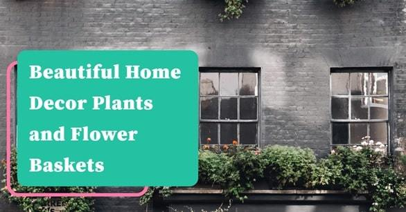 plants for home decoration